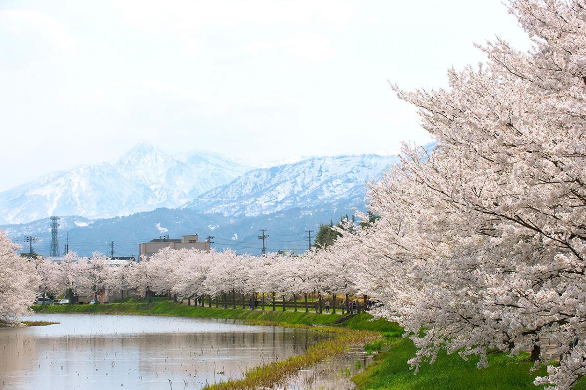Minami bori