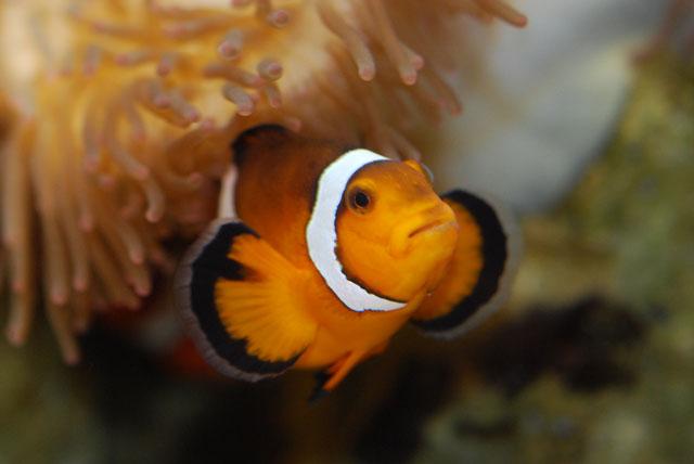 Sea of Clownfish and Anemones | QR Translator